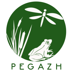 Logo Pegazh