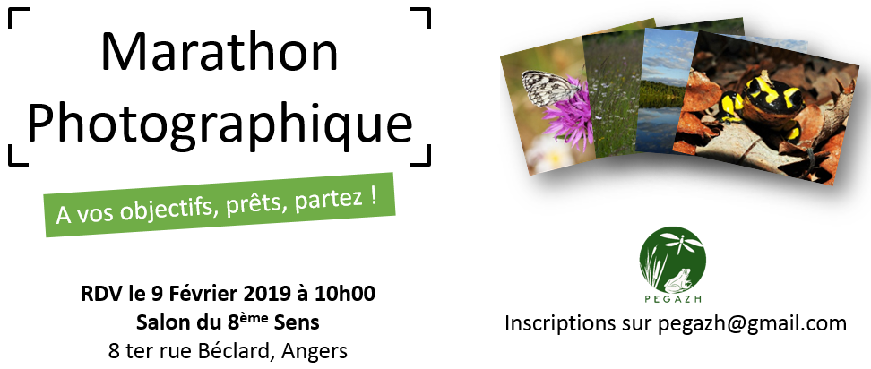 marathon_2019